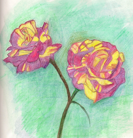 watercolor pencil sketch of climbing Tropical Thunder rose