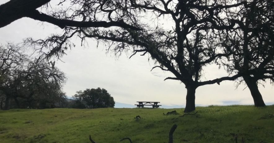 picnic table on a grassy hill surrounded by trees