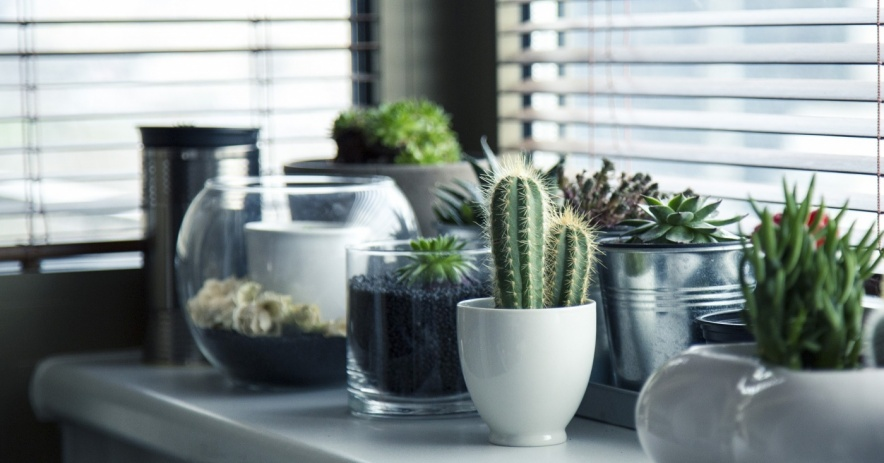 An assortment of cactuses and succulents on a windowsill.