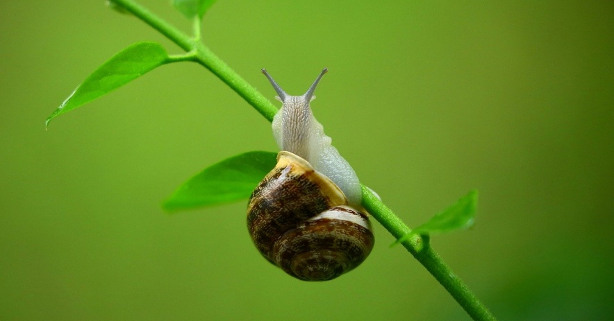 Snail on a plant stem.