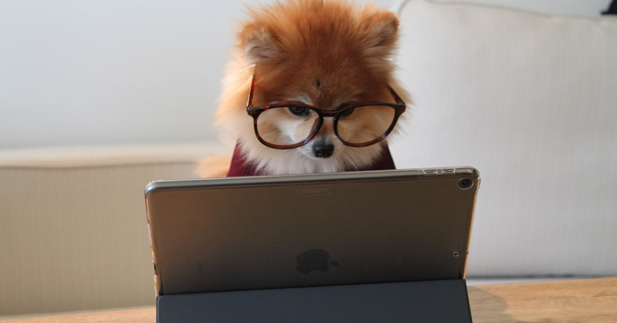 Pomeranian working on an iPad - photo by Cookie the Pom on Unsplash