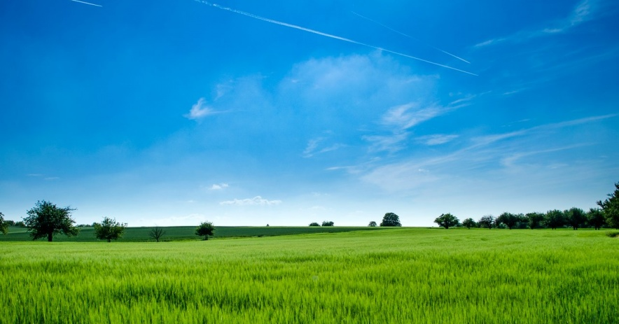Pastizales bajo un cielo azul.