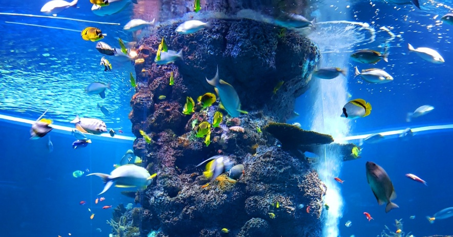Aquarium fish reef