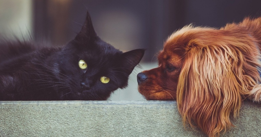 Dog and cat look at each other on a wall.