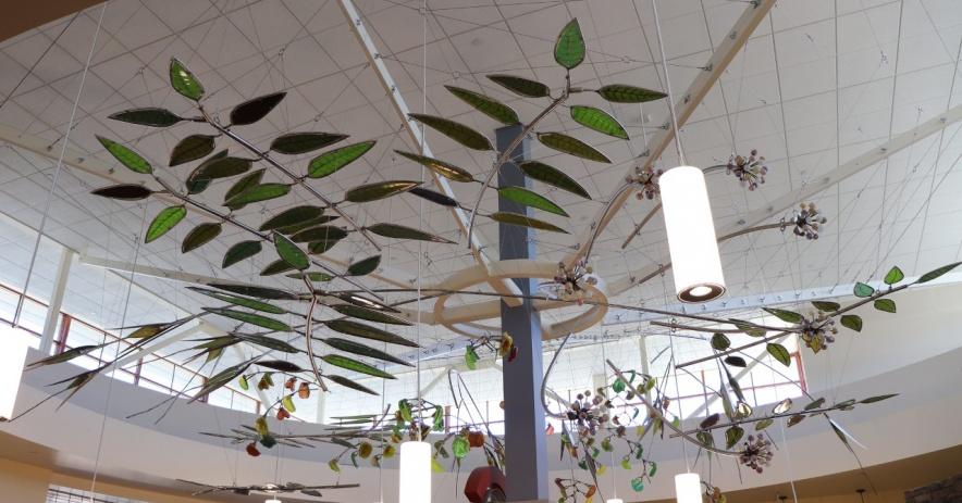 Web de botánicos nativos