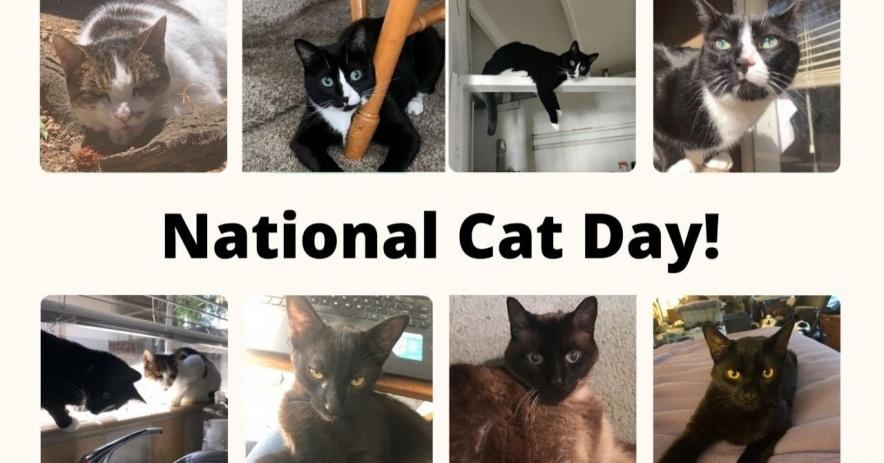 Imagen del Día Nacional del Gato